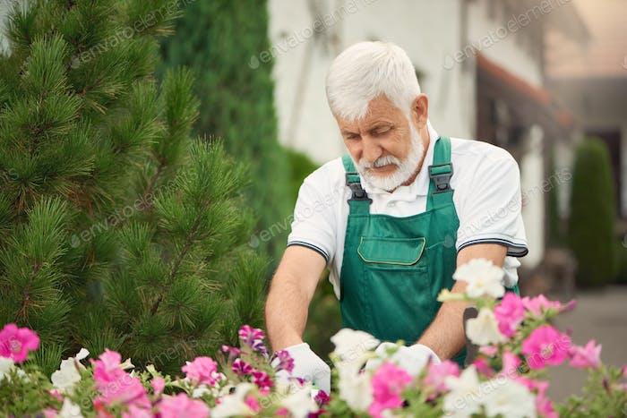Senior gardener pruning flowers on backyard