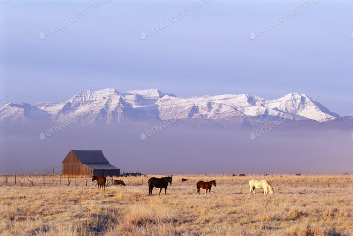A small group of horses grazing in a valley by snowcapped mountain range