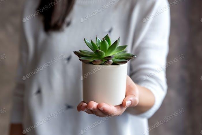 Woman holding succulent plant