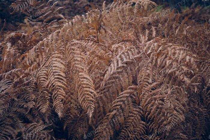 Dry twigs of fern