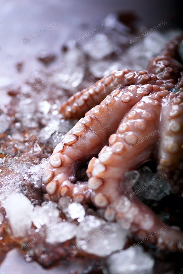 Frischer roher Tintenfisch auf Eis, brauner dunkler Hintergrund. Draufsicht, Kopierbereich