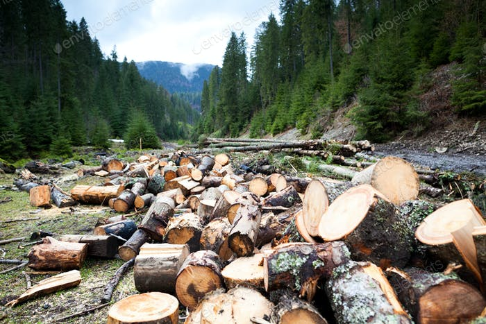 Firewood on field in front of forest