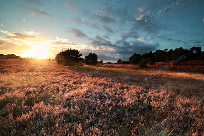 golden evening sunlight over flowering meadow