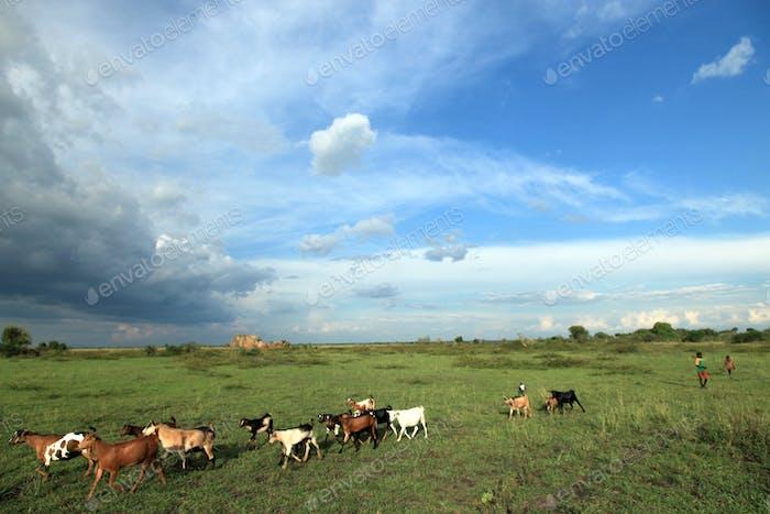 Meadow at Lake Anapa - Uganda, Africa