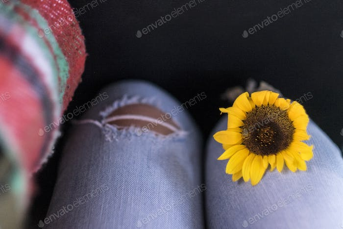 Closeup of yellow sunflower on woman legs on casual jeans - freedom and environen
