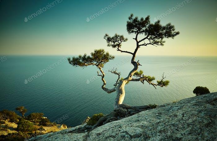 Tree and sea at sunset. Crimea landscape