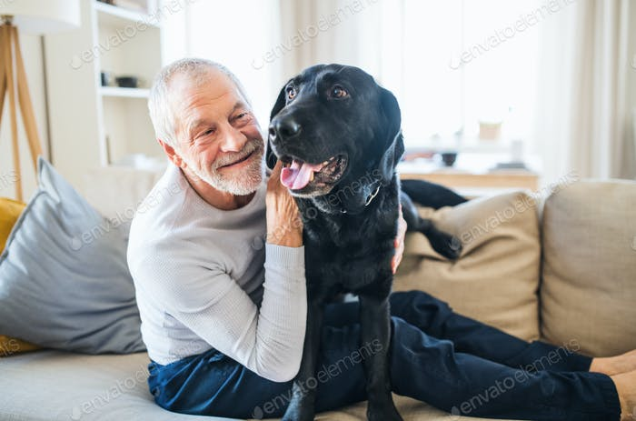 A happy senior man sitting on a sofa indoors with a pet dog at home.
