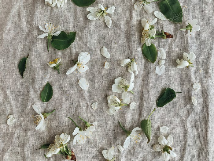 Cherry and apple blossoms, petals and leaves on rustic linen. Hello spring, Happy Easter! Aesthetic