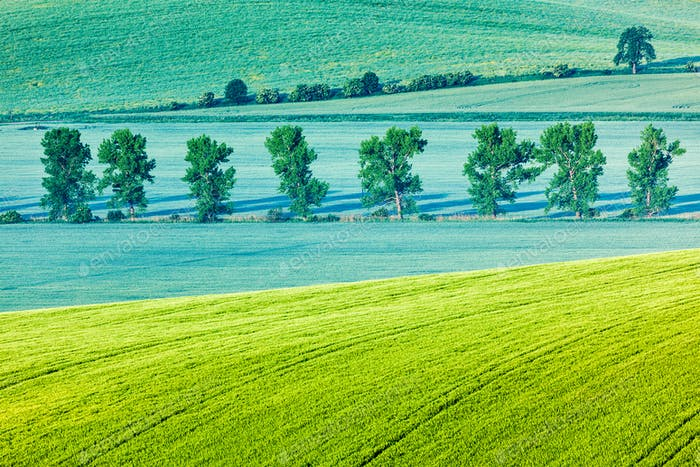 Thumbnail for Moravian rolling landscape with trees in morning