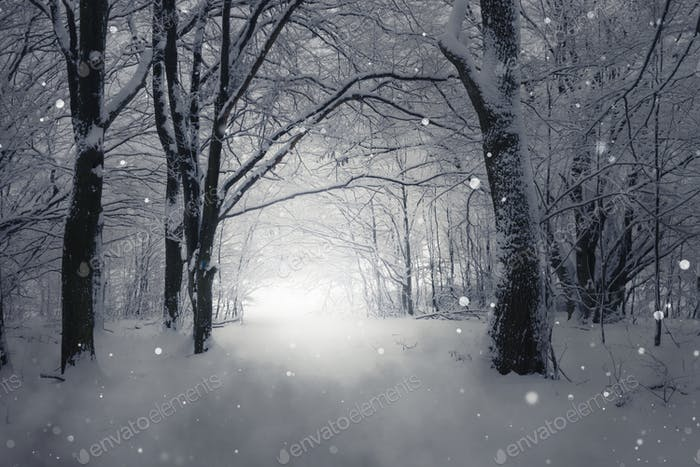 Winter scene with snow falling over forest path