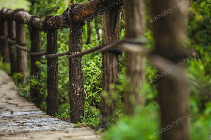 Suspension bridge in the forest