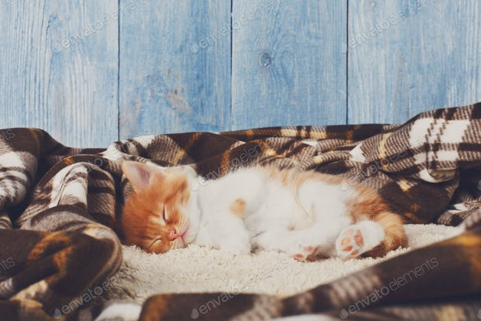Red orange kitten sleeps at blue wood