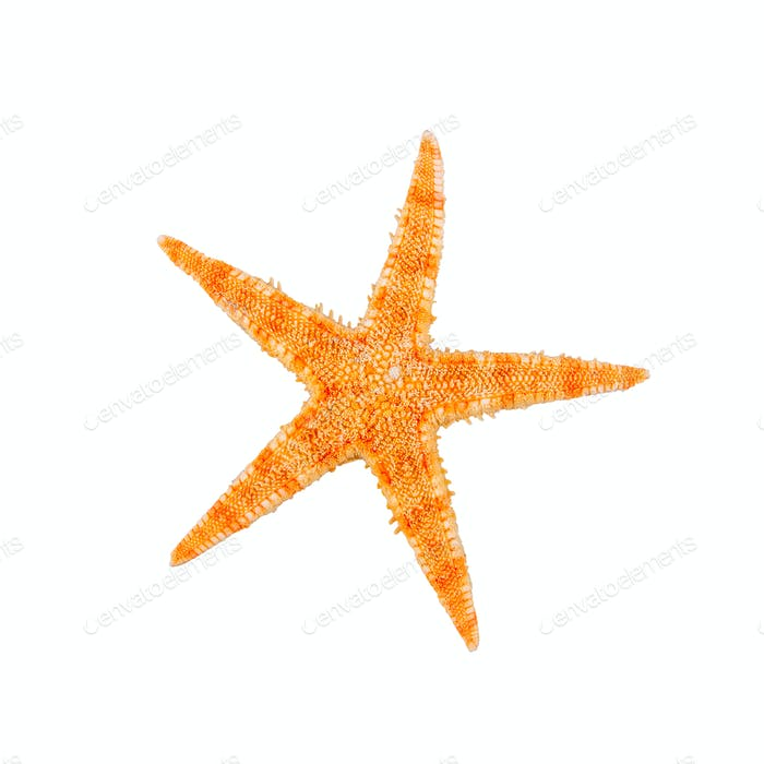 Sea starfish on a white background