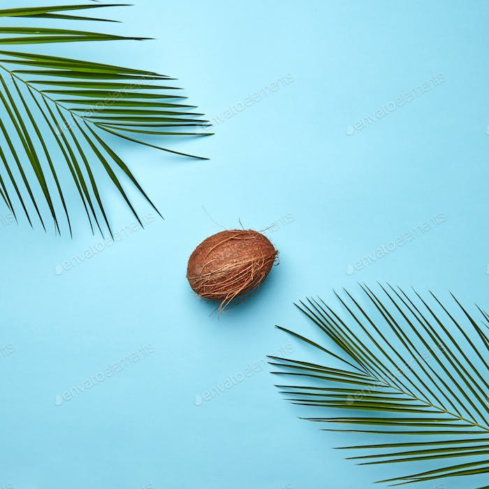 Composition of green palm leaves and organic coconut on a blue background with space for text. The