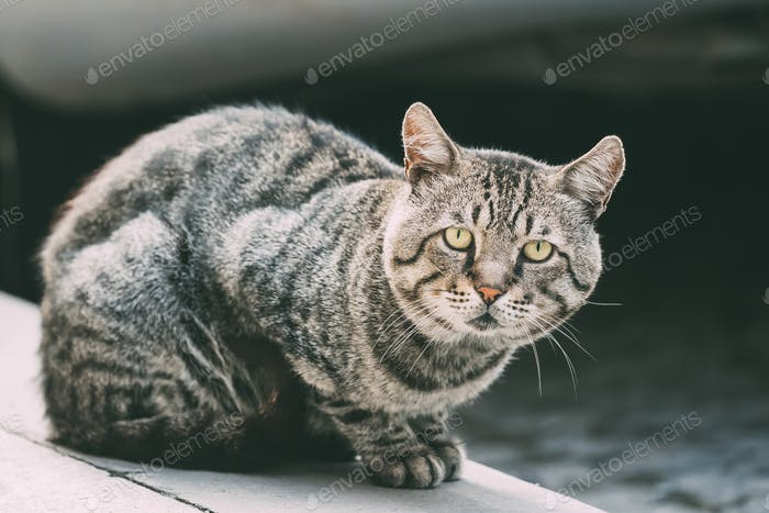 Funny curieux mignon sans-abri gris chat assis en plein air dans la rue