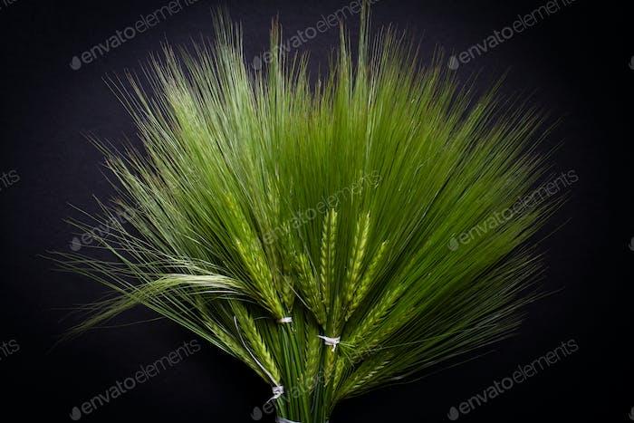 großer frischer grüner Weizenstrauß
