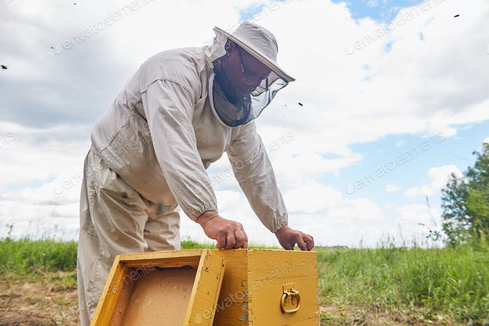 Senior Beekeeper in Apiary