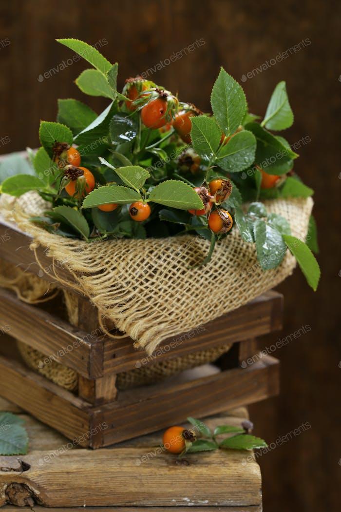 Organic Berries Rosehip