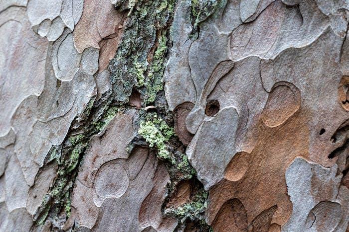 pine skin macro