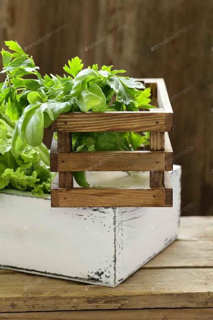 Organic Fragrant Herbs