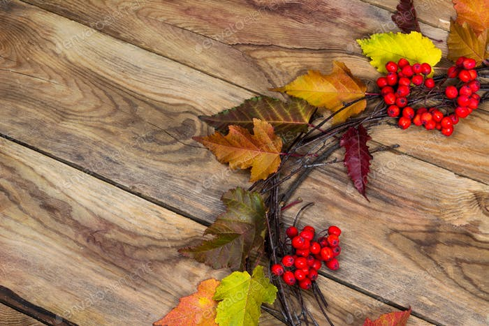 Fall background with ripe rowan berries door wreath, copy space