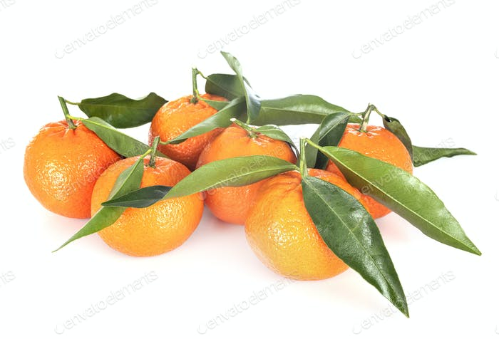 Clementine in studio