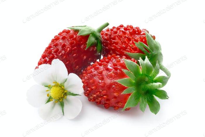 Alpine strawberry (Fragaria vesca)