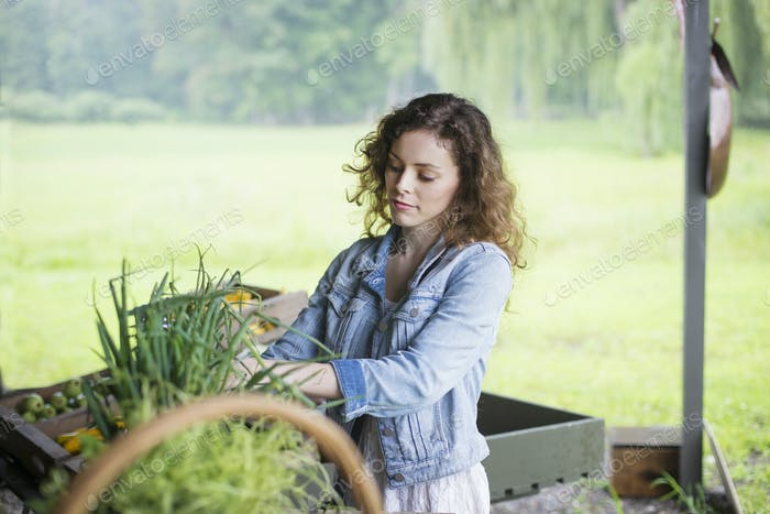 An organic fruit and vegetable farm. A young woman sorting vegetables.