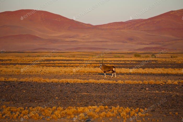 Dead trees in dry Deadvlei salt pan, Namib Naukluft Park, Namibia, Africa