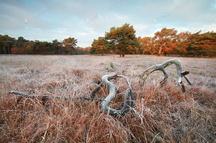 old tree on frosted meadow