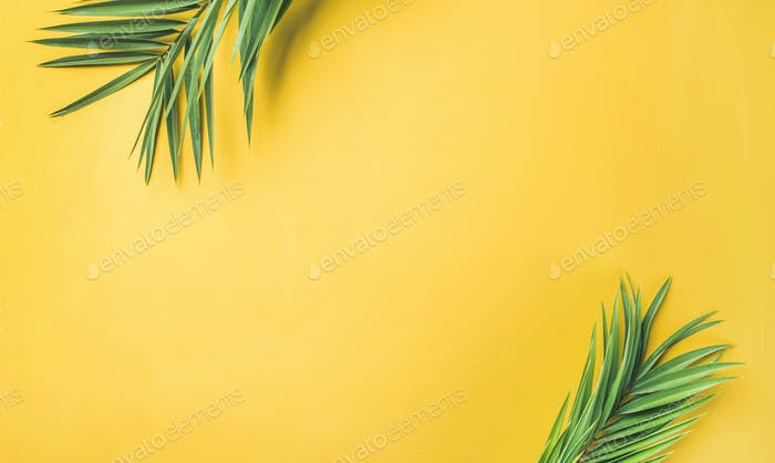 Green palm branches over yellow background, wide composition