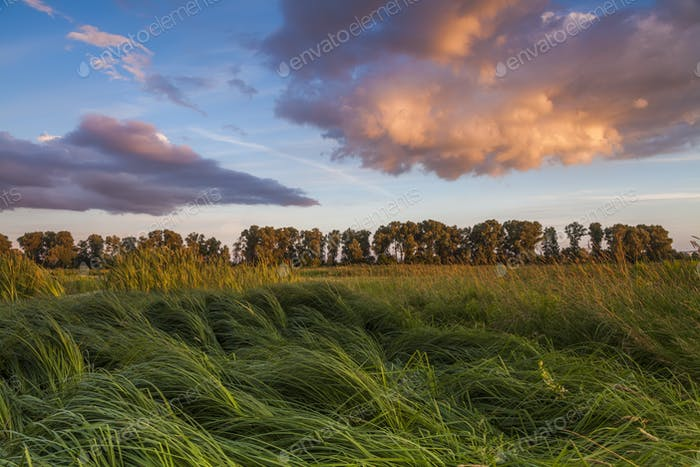 Landscape with marsh overgrown sedge
