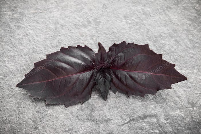 Red basil leaves over black stone background. Top view.