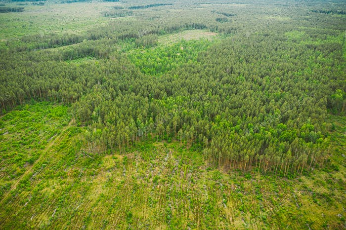 Aerial View Of Deforestation Area Landscape. Green Pine Forest In Deforestation Zone. Top View Of