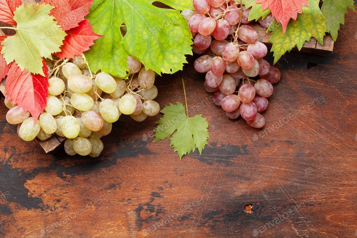 Grapes and autumn leaves