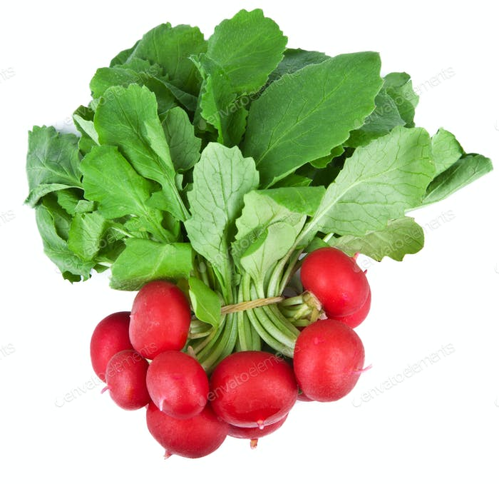 fresh radish isolated