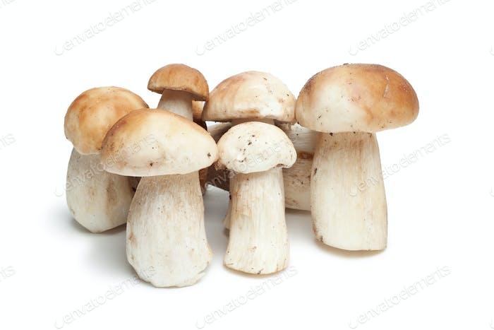 Mushrooms Isolated On The White Background