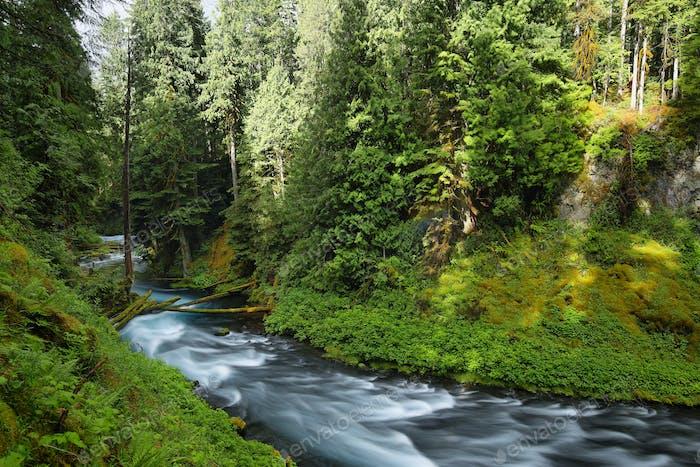 McKenzie River Oregon.