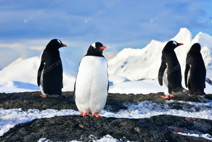 penguins  on a rock in Antarctica