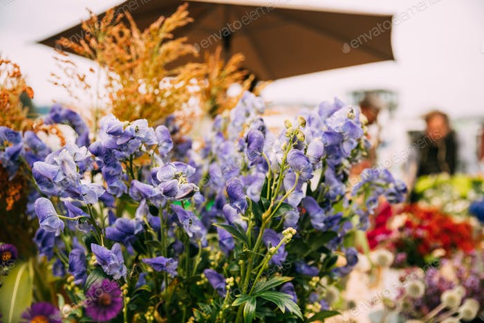 Flores púrpuras en el mercado de otoño