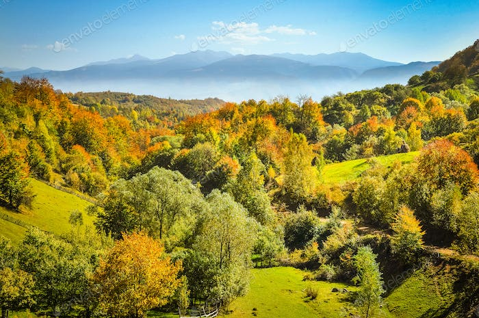 Fairy autumn landscape with colorful forest. Mountains in the background. Romania