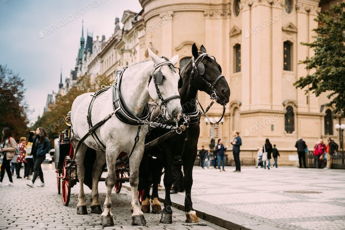 Prague, Czech Republic. Two Horses In Old-fashioned Coach At Old