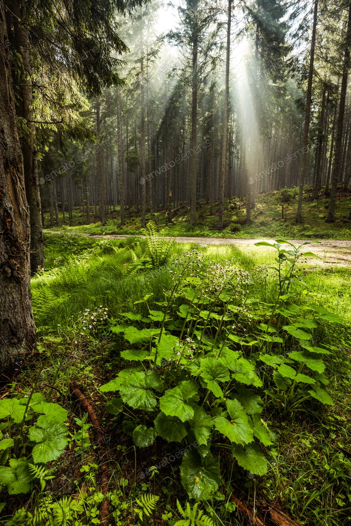 Mistyc and magical light in forest or woodland