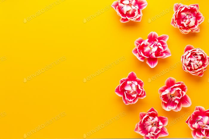 Spring Pink tulips on yellow background. Retro vintage style.