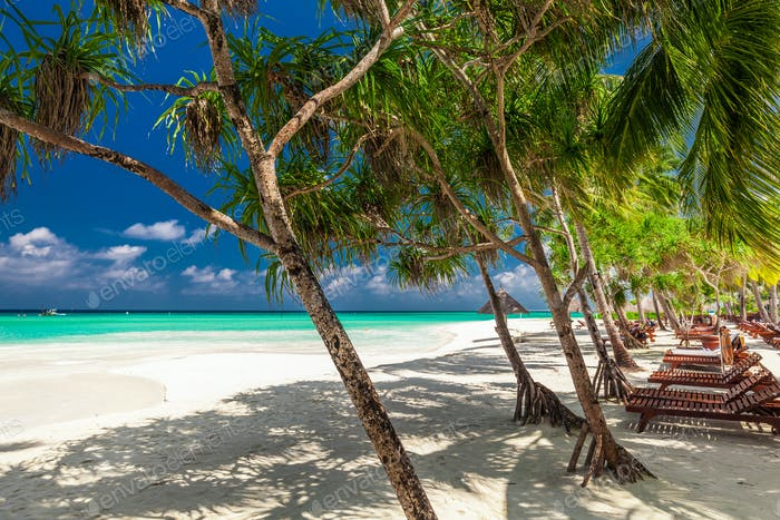 Beach beds in the shade of palm trees on tropical beach in Maldi