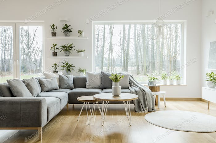 Natural grey living room interior