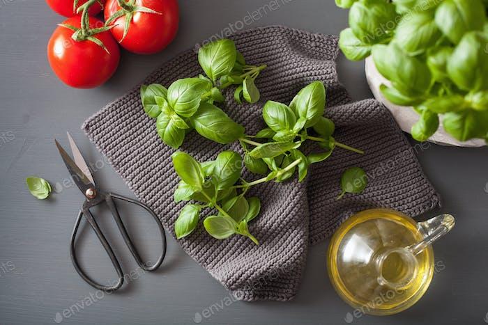 fresh basil herb on grey background