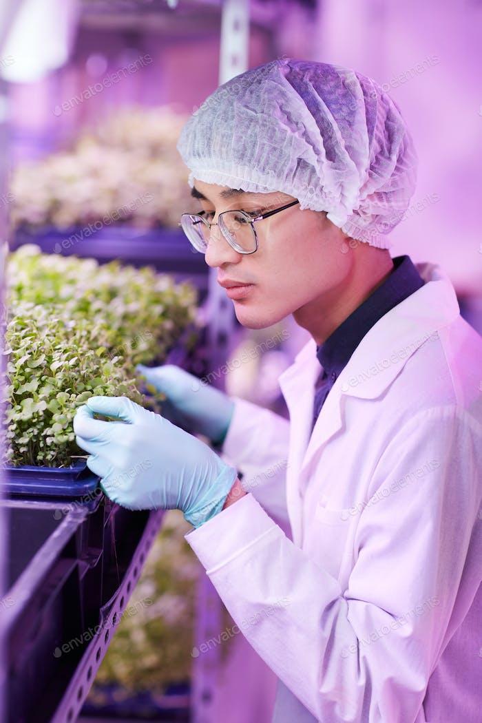 Botanist working with seedlings