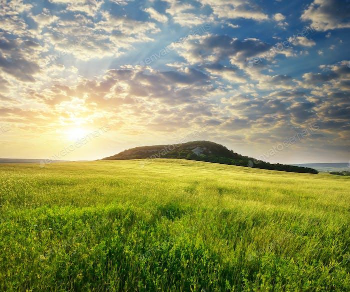 Beautiful landscape spring meadow