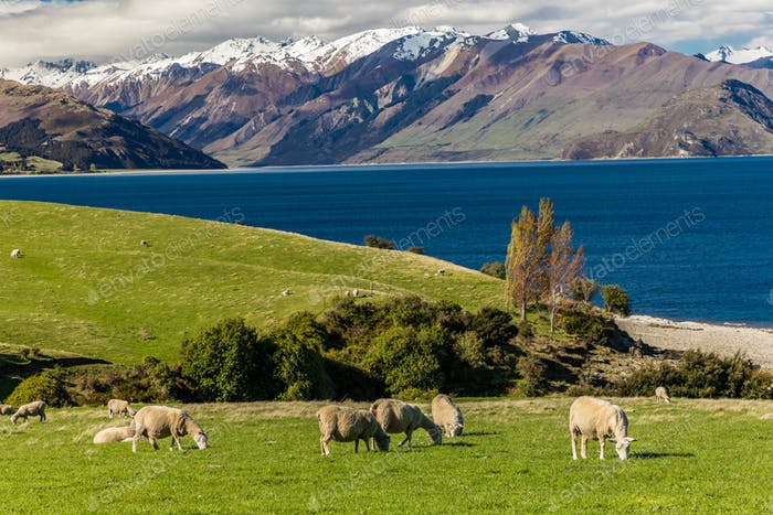 PanoramaFotos von Lake Hawea und Berge, Südinsel, New